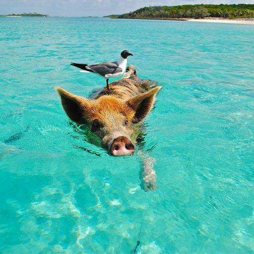 Bahamas-lifestyle-photo-02