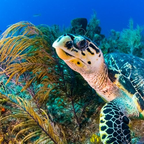 Turtle And Reef